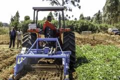 demonstration of Potato harvesting