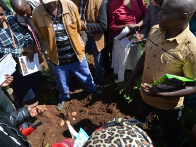 South rift region potato fair5