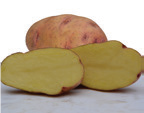 A photo of Shangi. The most common potato variety in the country.